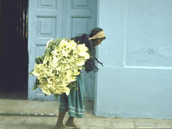 john-dominis-girl-with-calla-lilies