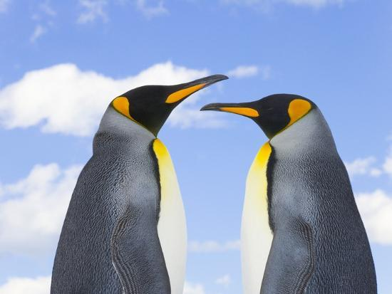 john-eastcott-yva-momatiuk-king-penguins
