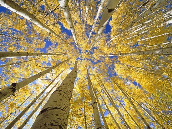john-eastcott-yva-momatiuk-quaking-aspen-grove-in-fall-colorado