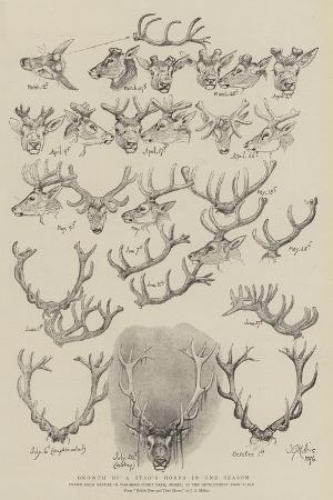john-everett-millais-growth-of-a-stag-s-horns-in-one-season