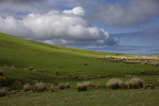 john-ford-new-zealand-asia-catlins-national-forest-grasses-and-clouds