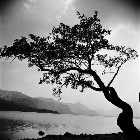 john-gay-a-windswept-tree-silhouetted-against-bright-sunlight