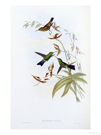 john-gould-a-monograph-of-the-trochilidae-or-family-of-hummingbirds-published-1849-1861