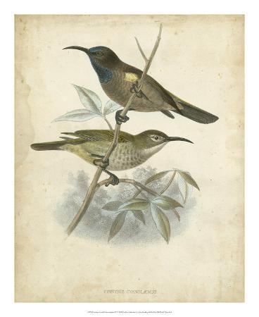 john-gould-antique-gould-hummingbird-iv