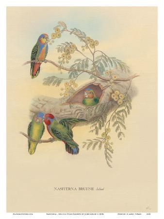 john-gould-bruijns-pygmy-parrots-nasiterna-bruijnii-salvad