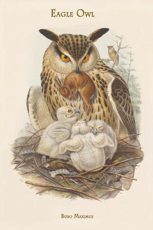 john-gould-bubo-maximus-eagle-owl