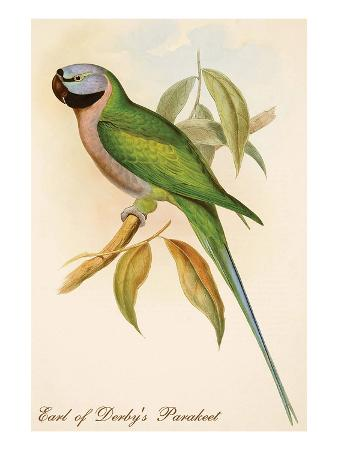 john-gould-earl-of-derby-s-parakeet