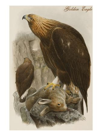 john-gould-golden-eagle