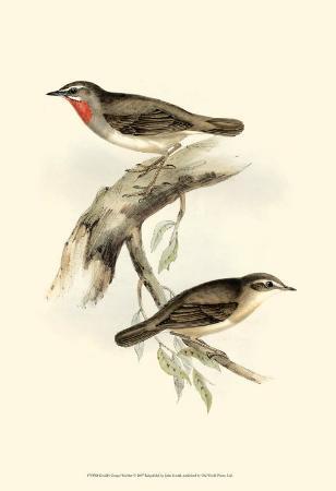 john-gould-gorget-warbler