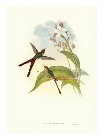 john-gould-gould-hummingbird-iii