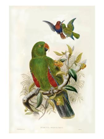 john-gould-gould-parrots-i