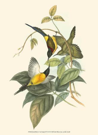 john-gould-small-birds-of-tropics-iv