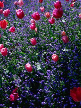 john-hay-flowers-in-monet-s-garden-giverny-haute-normandy-france