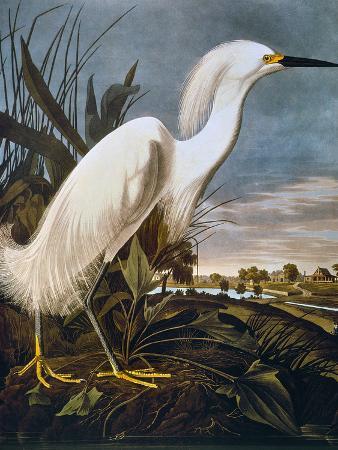 john-james-audubon-audubon-egret