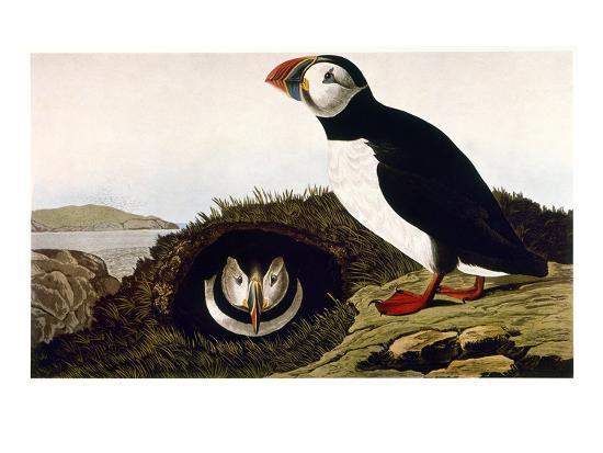 john-james-audubon-audubon-puffin-1827-38