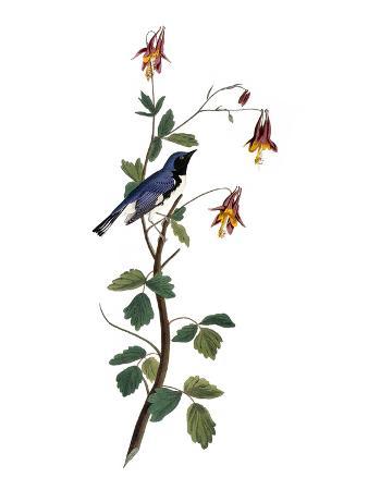 john-james-audubon-audubon-warbler-1827-38