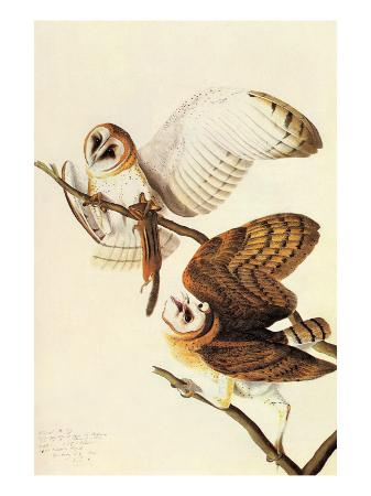 john-james-audubon-barn-owl
