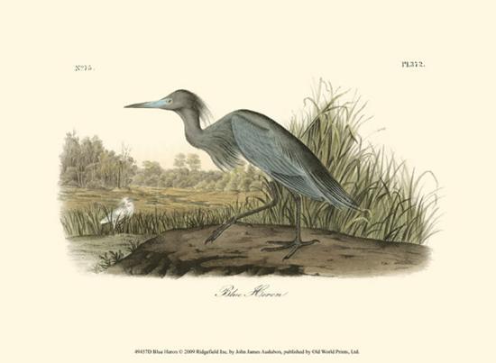 john-james-audubon-blue-heron