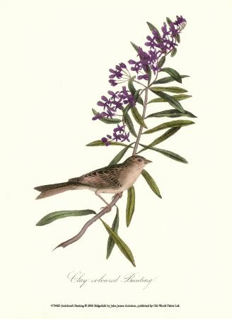 john-james-audubon-bunting