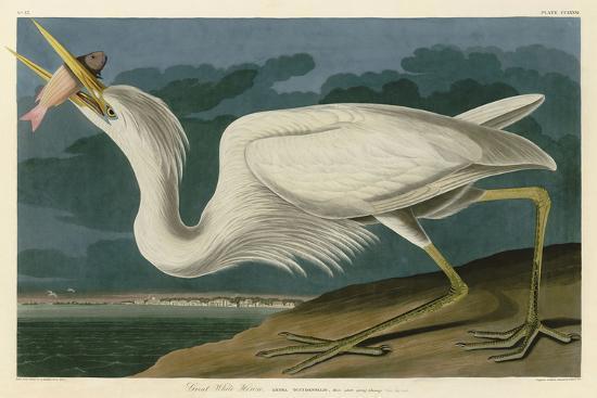 john-james-audubon-great-white-heron