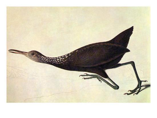 john-james-audubon-limpkin