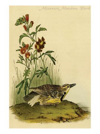 john-james-audubon-missouri-meadow-lark