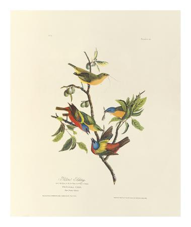 john-james-audubon-painted-bunting