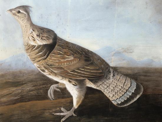 john-james-audubon-ruffed-goose-c-1812