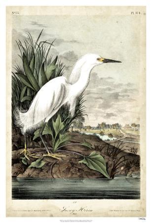 john-james-audubon-snowy-heron