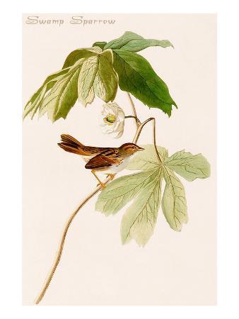 john-james-audubon-swamp-sparrow