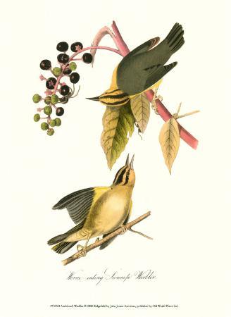 john-james-audubon-warbler