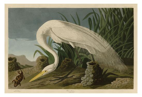 john-james-audubon-white-heron