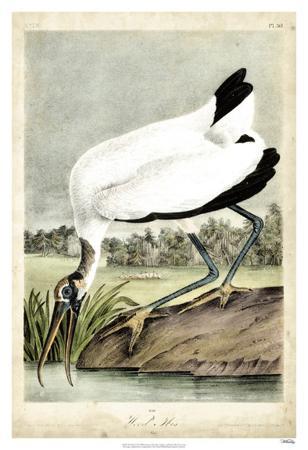 john-james-audubon-wood-ibis
