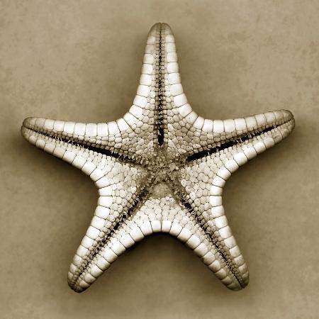 john-kuss-sugar-starfish-bottom