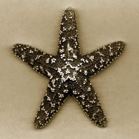 john-kuss-sugar-starfish