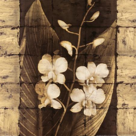 john-seba-orchids-in-bloom-i