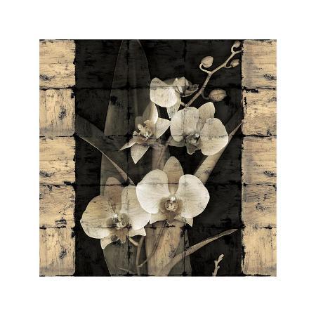 john-seba-orchids-in-bloom-ii