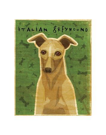 john-w-golden-italian-greyhound-fawn