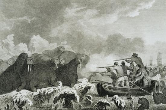 john-webber-captain-cook-s-men-shooting-sea-horses