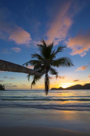 jon-arnold-palm-trees-and-tropical-beach-southern-mahe-seychelles
