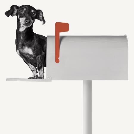 jon-bertelli-you-ve-got-mail