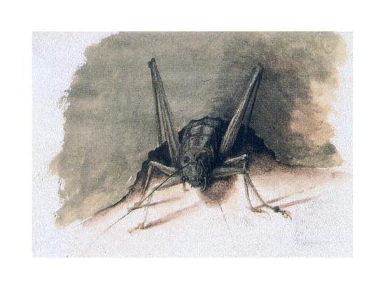 joris-hoefnagel-green-grasshopper-16th-century