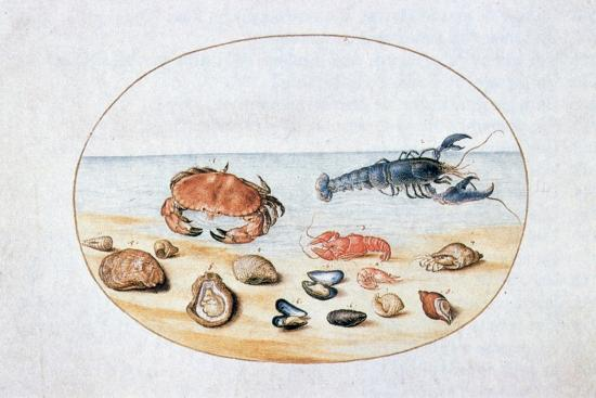 joris-hoefnagel-shells-and-shellfish-16th-century
