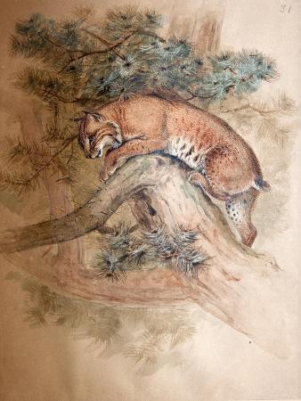 joseph-wolf-norwegian-lynx-1851-69