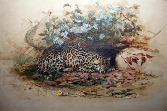 joseph-wolf-ocelot-1851-52