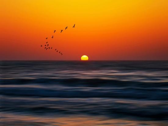 josh-adamski-birds-at-sunset