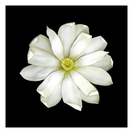 joson-magnolia