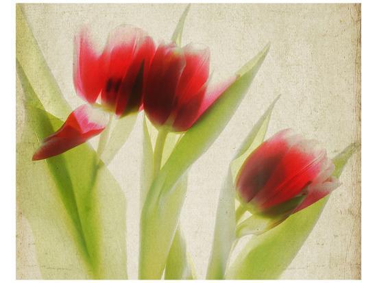 judy-stalus-red-tulips-i