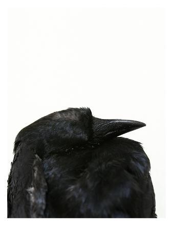 judy-tuwaletstiwa-crow-head