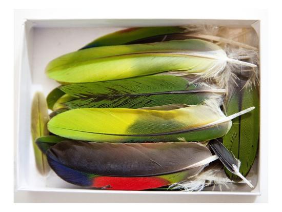 judy-tuwaletstiwa-parrot-feathers-no-2
